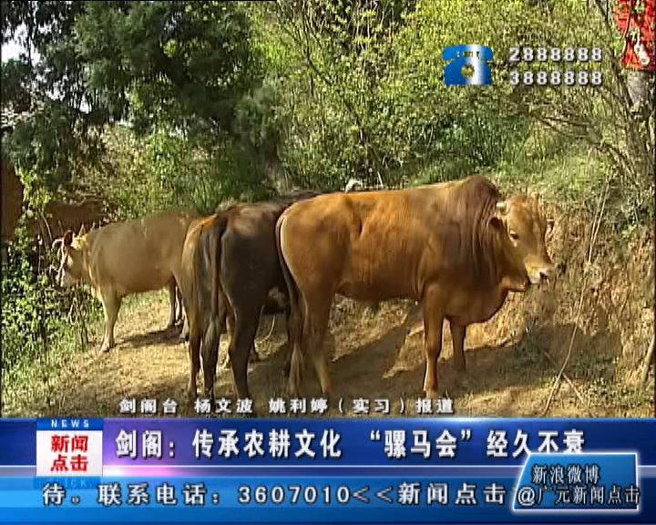 """传承农耕文化""""骡马会""""经久不衰"""