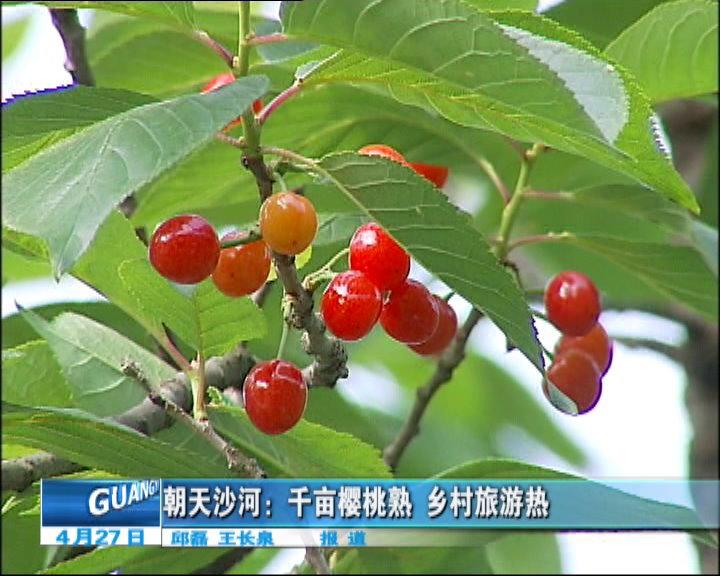 千亩樱桃熟乡村旅游热
