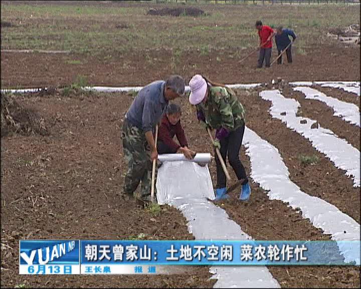 朝天曾家山:土地不空闲菜农轮作忙