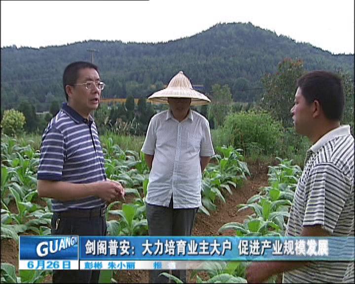 剑阁pu安:大li培yu业主大户促进产业规模发zhan